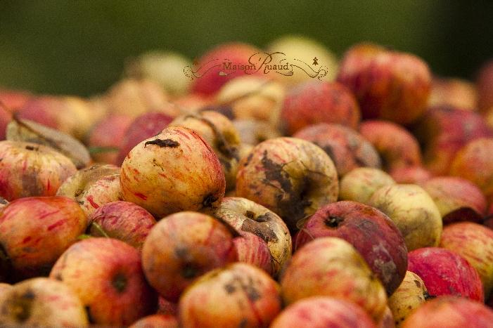 Pommes ruaud